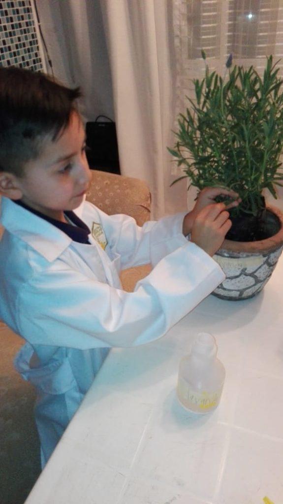Cortando un fragmento de la planta
