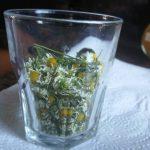 Flores de manzanilla secas
