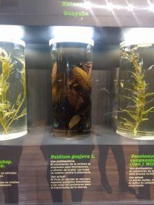 visita museo de medicina Sala de herbolaria